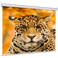 Экран Lumien Eco Picture 200x200cm LEP-100103